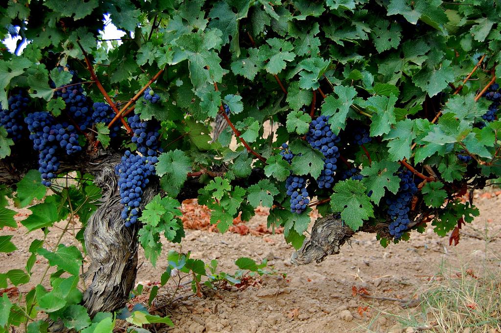 Tast de vins ecològics
